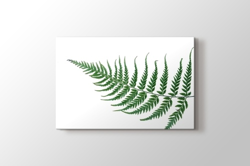 Fern Leaf görseli.