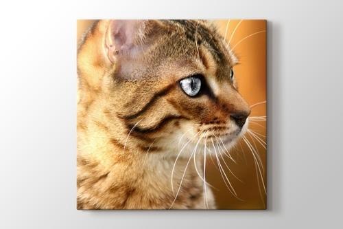 Pussy Cat görseli.