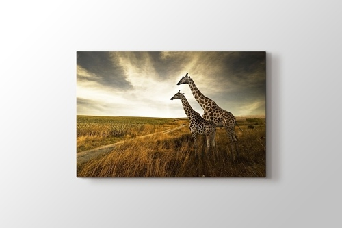 Giraffes görseli.