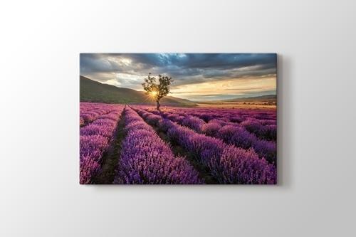Lavender Field görseli.