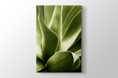 Flora görseli.