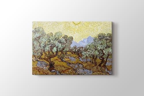 Olive Trees görseli.