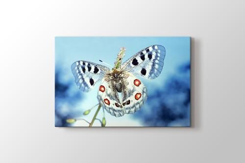 Buz Mavi Kelebek görseli.