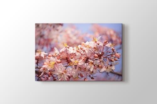 Pink Flora görseli.