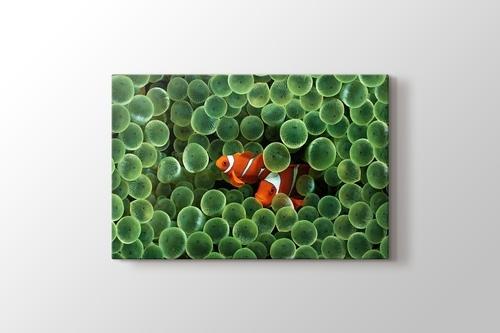 Clown Fishes görseli.