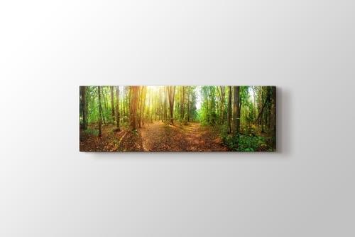 Güneşli bir Günde Orman Panorama görseli.