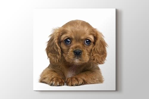 Terrier görseli.