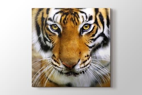 Tiger Face görseli.