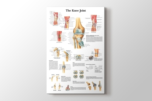 Knee Joint Chart görseli.