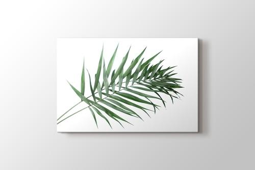 Beautiful Palm Leaves görseli.