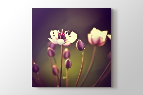 İlkbahar Çiçekleri görseli.