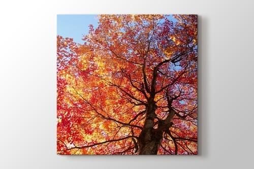 Autumn Leaves görseli.