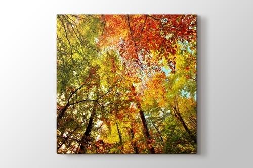 Colourful Tree görseli.