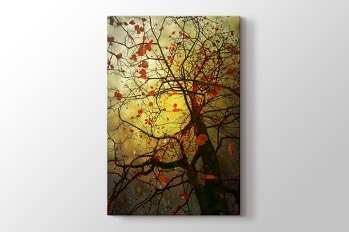 Tree Viole görseli.