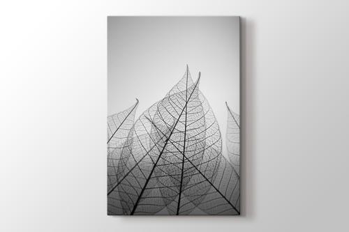 Skeleton Leaves görseli.