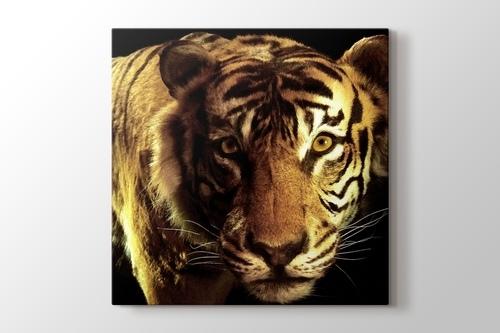 CloseUp Tiger görseli.