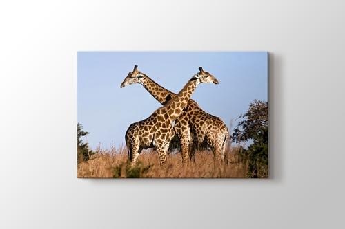 Giraffe Ithala görseli.