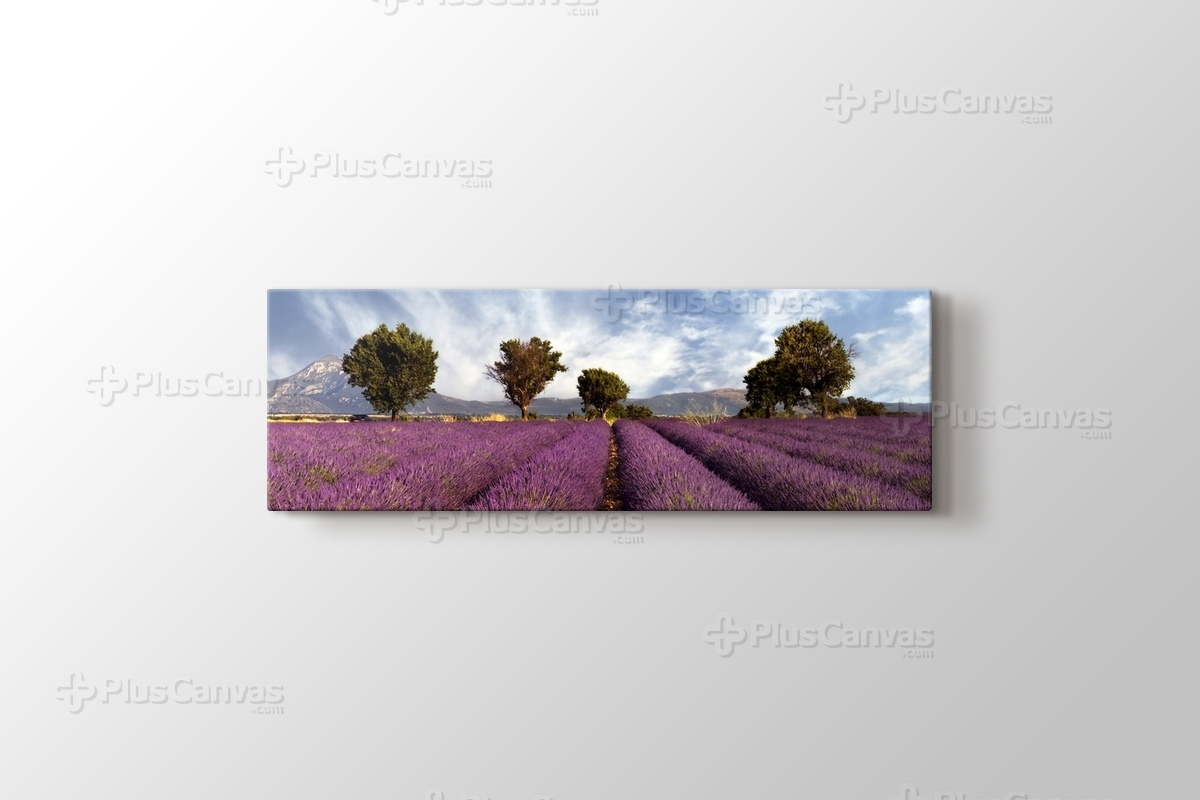 Lavender Fields II görseli.