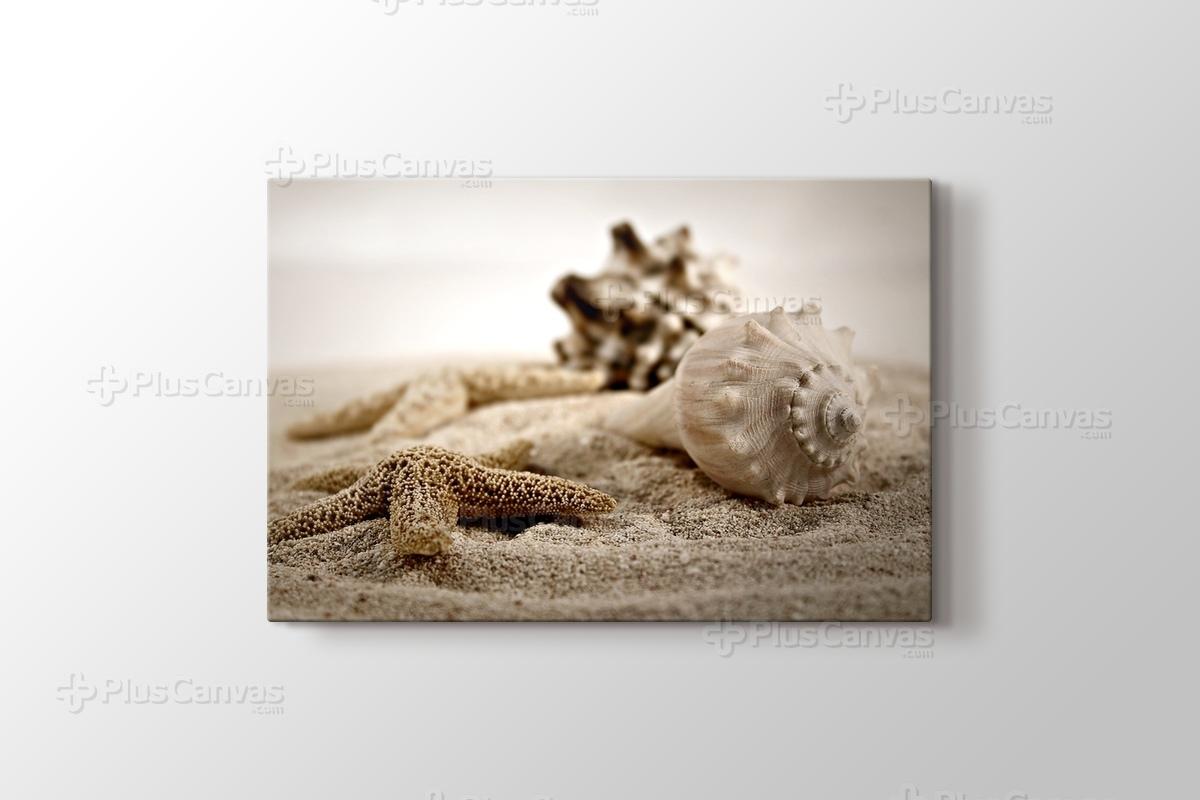Kum üzerinde Deniz Kabukları görseli.