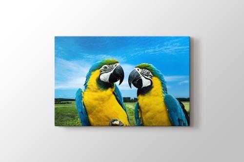 Parrots Chat görseli.