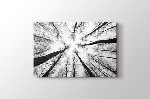 Long Trees görseli.